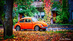 Fall beetle (Joni Salama) Tags: auto luonto kasvit kulkuneuvot lehti syksy nikcollection oranssi photoshop liikenne panorama volkswagen maa helsinki uusimaa finland car vehicle leaf leaves orange suomi
