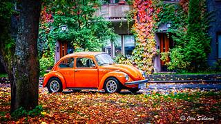Fall beetle