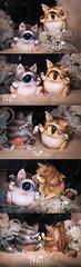 IMG_2270 () Tags: bjd cyclops kitten