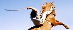O tostado (Eduardo Amorim) Tags: brazil horses horse southamerica brasil caballo cheval caballos cavalos pelotas pferde cavalli cavallo cavalo gauchos pferd pampa hest hevonen campanha brsil chevaux gaucho  amricadosul hst gacho  campero amriquedusud  gachos  sudamrica suramrica amricadelsur  sdamerika jineteada   camperos americadelsud gineteada  americameridionale campeiros campeiro eduardoamorim