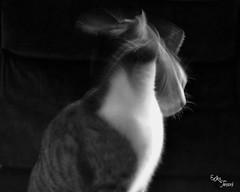 metamorphosis. (eryliciouss) Tags: blackandwhite white black animal cat nikon kitten shot quote kitty bn moved 1855 gatto bianco nero animali metamorphosis biancoenero mutation frase oldshot metamorfosi mutazione
