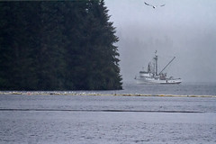 Rainy Day Seiner (Mitch Seaver) Tags: ocean seascape nature alaska canon landscape coast fishing scenic tongassnationalforest coastline fishingboat insidepassage ketchikan southeastalaska neetsbay tongass commercialfishing seiner seineboat mygearandme mygearandmepremium mygearandmebronze mygearandmesilver