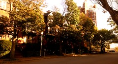 Grove Place (Fall) (JHughesthing) Tags: street city autumn urban fall neighborhood rochester rowhouses downtownrochester groveplace