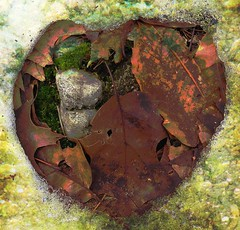 heart for Thea (natahaha) Tags: snow leaves photoshop iceformation