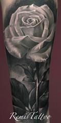 white-rose-tattoo