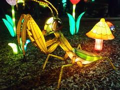 #illuminasia  #autumn (Mr. Happy Face - Peace :)) Tags: illuminations lights lumen lux luz light luce licht  lumire  solar yyc cowtown calgary art2016