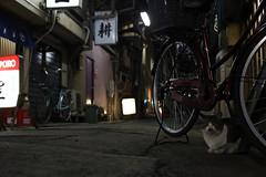 121216tc08 (toruumeda) Tags: cats eos tokyo straycat 6d ultron 40mmf2
