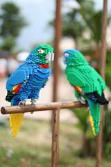 parrots (Jimmy_Soh) Tags: lego parrots legoland 500d