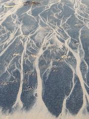 Sea Coal Art (Munki Munki) Tags: trees beach tide sands ephemeral redcar coatham southgare seacoal