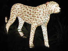 Cheetah in Lights (meeko_) Tags: africa christmas gardens night tampa lights town florida cheetah crossroads themepark buschgardens busch buschgardenstampa christmastown buschgardensafrica buschgardenstampabay junglejubilee