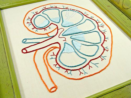 Framed Embroidery Kidney Anatomy Art. Ha by Hey Paul Studios, on Flickr