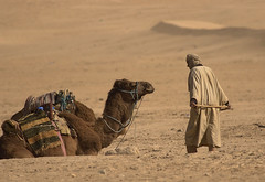 The old man and his camel (andeisak) Tags: brown tunisia oldman camel douz