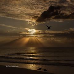 FELIZ 2013! - HAPPY 2013! (Pilar Azaa Taln ) Tags: sea sky sunlight sunrise mar aves amanecer cielo magical gaviotas newday rayosdesol salidadelsol nuevodia beamsofthesun puramagia pilarazaataln mgicomomento feliz2013 happy2013 meagulls copyrightpilarazaataln