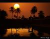 Ain El-Faras ! (Bashar Shglila) Tags: new light sunset sun lake sahara water silhouette desert year palm oasis عين ghadames غروب صحراء ليبيا 2013 واحة الفرس نخيل الليبية غدامس líbya ghasamis