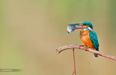 Gotcha! (Sandeep Somasekharan) Tags: sandyclix