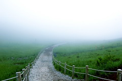 the unkown (Aleksa Castell) Tags: lake nature japan fog clouds forest landscape suicide    pathway portals mtfuji dimensions ashi