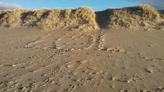 LOL (thueringen) Tags: strand lol steine dne botschaft