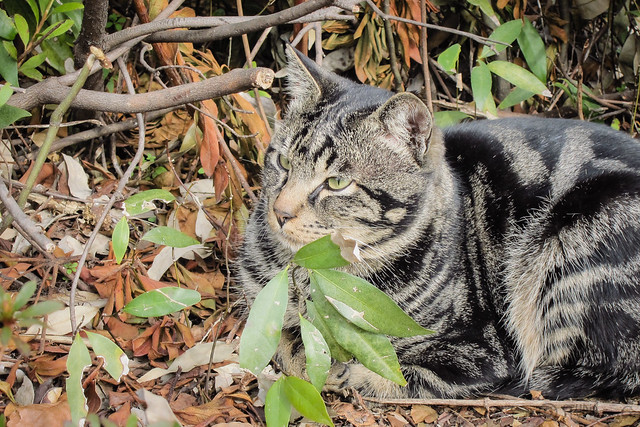 Today's Cat@2013-01-05