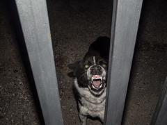 (Sakis Dazanis) Tags: dog canine sakis spnc dazanis