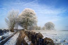 As the fog cleared. (sidibousaid60) Tags: uk trees mist fog buxton frost derbyshire fairfield tonguelane