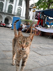 You Lookin' At Me? (The Travelin Chicks) Tags: street city trip travel vacation animal cat square feline market culture kitty adventure backpacking stray marketplace panama traveling oldtown panamacity townsquare centralamerica straycat streetcat straykitty strayanimal strayanimals traveladventure streetanimal travelinchucks travelinchicks