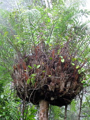 guest house (Hai-Ray) Tags: waterfall rainforest wasserfall australia australien kuranda regenwald