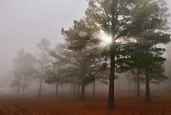 Mystic Forest (Jeka World Photography) Tags: trees sun sunlight fog forest woods arkansas sunbeams ozarknationalforest upperbuffalonationalriver
