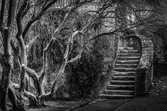 Escalade (Mad Eejit) Tags: ireland dublin tree castle landscape stair malahide