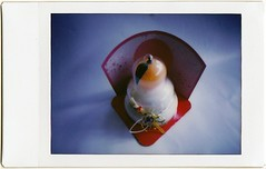 Kagami mochi (art y fotos) Tags: film hawaii back lomography oahu handmade mini bamboo pinhole diana pack homemade mikan instant honolulu mochi toycameras bambole instax debonair kagamimochi fpp dianainstantback filmphotographypodcast bamboopinholecamera filmphotographyproject plasticfilmtastic120 fppdebonair filmtasticplasticinstax lebambolemkx pinstanair