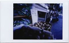 Chinatown mouser (art y fotos) Tags: cats film vegetables hawaii back lomography chinatown oahu handmade mini bamboo pinhole diana pack homemade instant honolulu toycameras streetmarket bambole instax debonair fpp waterchestnuts dianainstantback filmphotographypodcast bamboopinholecamera filmphotographyproject plasticfilmtastic120 fppdebonair filmtasticplasticinstax lebambolemkx pinstanair
