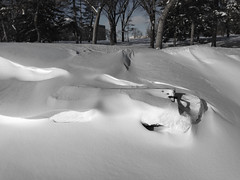 buried bench monday (Harry2010) Tags: park winter snow bench regina saskatchewan iphone wascana