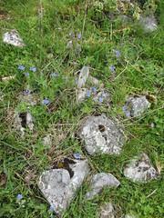 Fieldstone and wildflowers at Vidikovac, Uvac Nature Reserve, Serbia (Paul McClure DC) Tags: uvac naturereserve serbia srbija zlatibor druinie vidikovac sjenica balkans may2016