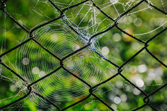 A Natureza no abandona / The Nature don't abandon (Pablo.Barros) Tags: amricadosul brasil brazil mirantedonamarta riodejaneiro southamerica grade teiadearanha cobweb nature natureza macrodreams