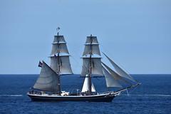 Morgenster (42jph) Tags: nikon d7200 sigma 150500 uk england northumberland tall ships 2016 boat sea ocean water sail