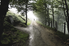 peregrino (Monsieur_L) Tags: pilgrimage santiago saintjacques compostela compostelle forest mist gloomy light green nature landscape pilgrim peregrino hike hiker pathway travel roncevaux outdoors tree fog