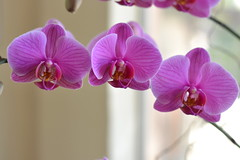 Together... (M. Bells. Photography) Tags: art photos photography flower flowers nature orchids