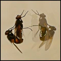 Willingen (abudulla.saheem) Tags: photoofbadqualitybutworthtobeseen fly fliegen sex mirror spiegel outoffocus unscharf willingen hesse hessen germany deutschland panasonic lumix dmctz101 abudullasaheem