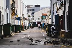 Alleys of Singapore (luiz.reschke) Tags: singapura sia singapore asia street road alley alleyway birds man dumpster