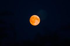 Blood Moon-0685-2 (Paul C Cooper) Tags: 52in2016 moon blood night full