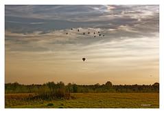 SEPTEMBERABEND IN DEN MAASDUINEN (Babaou) Tags: niederlande nederland limburg limburgnoord limburgslandschap bergen nationaalparkdemaasduinen maasduinen sonnenuntergang ballonfahrt ballon wildgnse wildgeese dxo heerenven