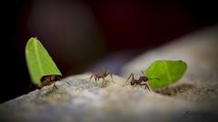 (Euter Mangia Fotografia) Tags: euter mangia fotografia fine art
