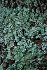 A2 Tree Bark (amandamancusophotography) Tags: 2016 a2 macro 361002