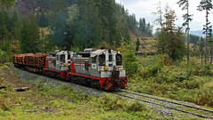 WFP 304 ~ Nimpkish Valley (Chris City) Tags: train railway railroad logging rainforest wfp nimpkishvalley vancouverisland