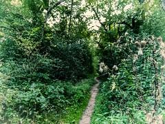 kleiner Waldweg (FotoTrenz NRW) Tags: weg pfad wald natur grn sptsommer verblht pflanzen forest landschaft landscape way nature panasonic lumixg5