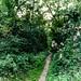 kleiner Waldweg