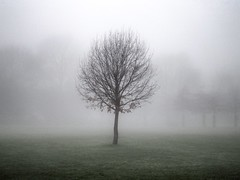 Lost in the fog Explored #25 8th January 2013 (Broo_am (Andy B)) Tags: park morning mist tree field fog branches solo uploaded:by=flickrmobile flickriosapp:filter=nofilter