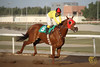 Q8 Horse Riding Champion (Adnan Yousef) Tags: horse canon riding 7d kuwait kw q8 adnan yousef kuw canon7d bpfkwt bpfgallery adnanyousef