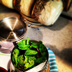 making mint tea (Willey 3K) Tags: