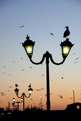 (atomareaufruestung) Tags: africa city sunset sky urban colors birds silhouette port fishing streetlight heaven surf barco ship harbour streetlamp gull january surfing atlantic enero morocco afrika hafen atlanticocean schiff essaouira marokko fischer 2013 imsouane assawirah