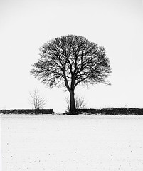 Lone Tree on a Winter Day in a Scottish Field (Magdalen Green Photography) Tags: blackandwhite bw snow scotland pretty tayside lonetree winterday winterscene 0056 scottishfield scottishwinter calmnaturescene iaingordon magdalengreenphotography